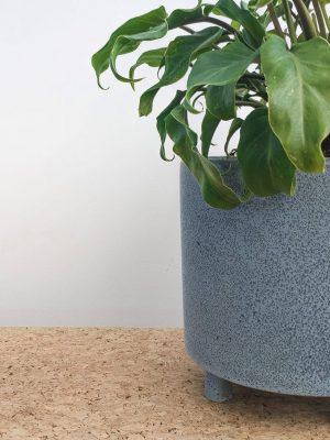 Philodendron Xanadu Blue Ceramic Pot close up