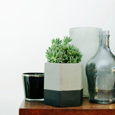 Succulents - Large - Black Dipped Pot