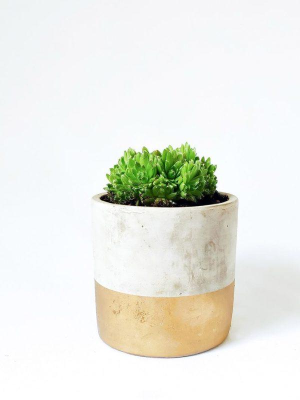Gold Dipped Succulent Concrete Pot