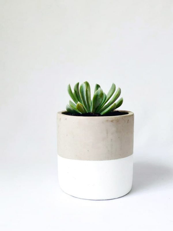 White Dipped Succulent Concrete Pot