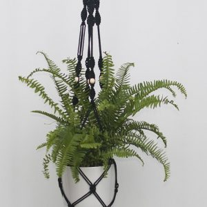 Boston Fern - Black Macrame Hanger White Pot