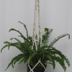 Boston Fern - Natural Macrame Hanger Black Pot