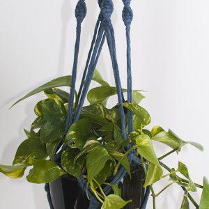 Devil's Ivy - Denim Blue Macrame Hanger Black Pot