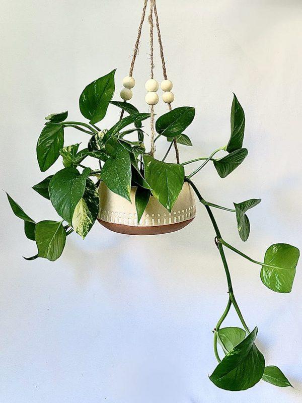 Devils Ivy in Hanging Kyra Planter