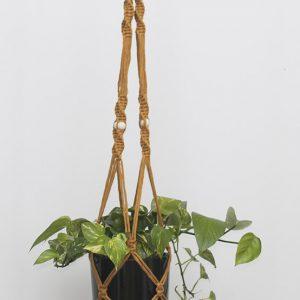 Devil's Ivy - Mustard Macrame Hanger Black Pot