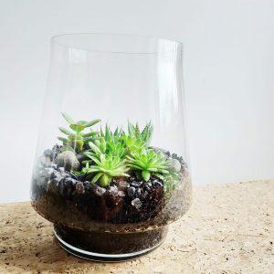 Succulent Terrarium by Pot and Posy