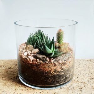 Succulent and Cactus Terrarium made by Pot and Posy