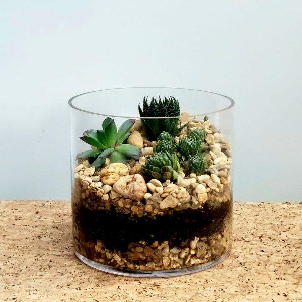 Cylinder Glass Terrarium