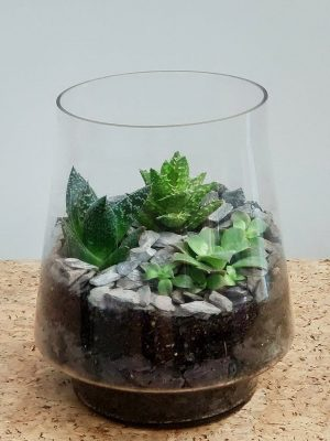Conical Glass Terrarium