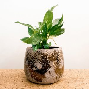 Variegated Peace Lily in Gold Earth Ceramic Pot