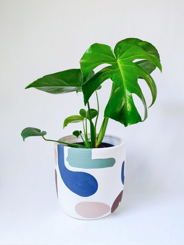 Monstera Deliciosa in Abstract Planter