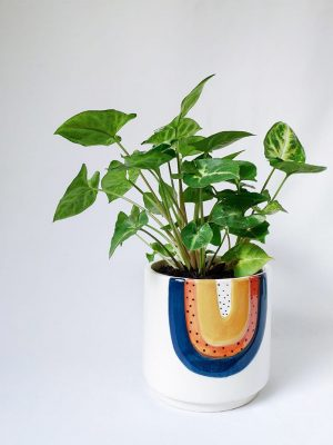 Small Arrowhead Plant in Woodstock Planter