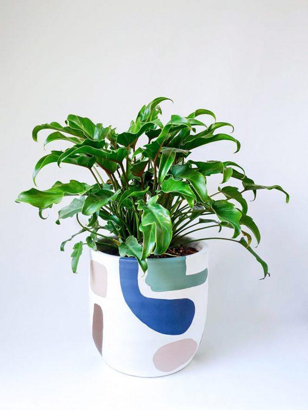 Xanadu in Abstract Planter