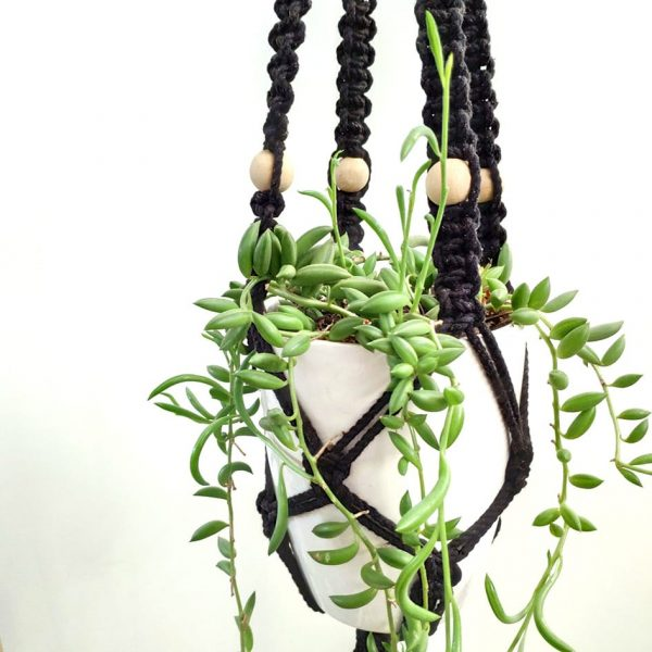 String of Bananas plant in Macrame hanger made by Pot and Posy