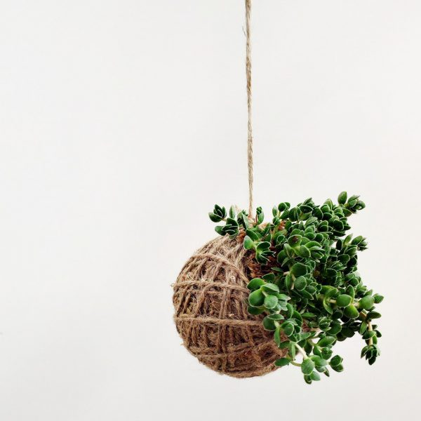 Hanging Sedum Succulent Kokedama by Pot and Posy