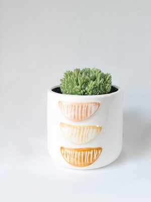 Citrus Succer – Ceramic Pot and Succulent