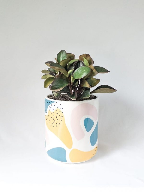 Peperomia Red Edge in Memphis Pot