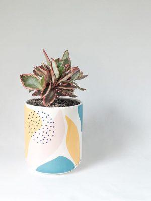 Peperomia Tricolor in Memphis Pot