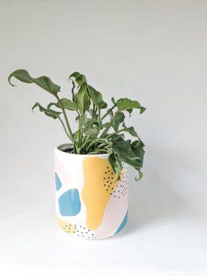 Philodendron Xanadu in Memphis Pot