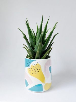 Aloe Gemini by Pot and Posy Plant Delivery