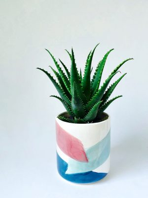 Aloe Gemini in Brushstrokes Pot