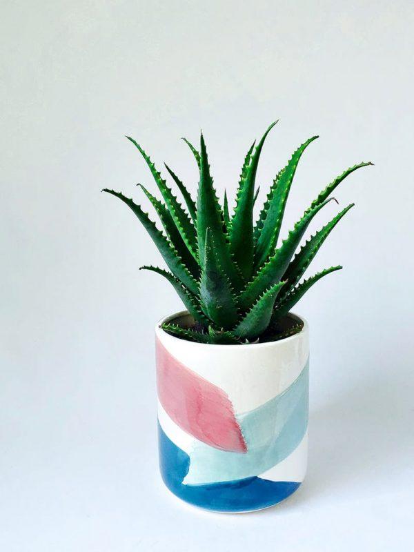 Aloe Gemini in Brushstrokes Pot