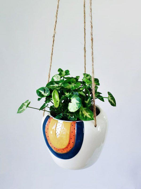 Hanging Arrowhead Plant