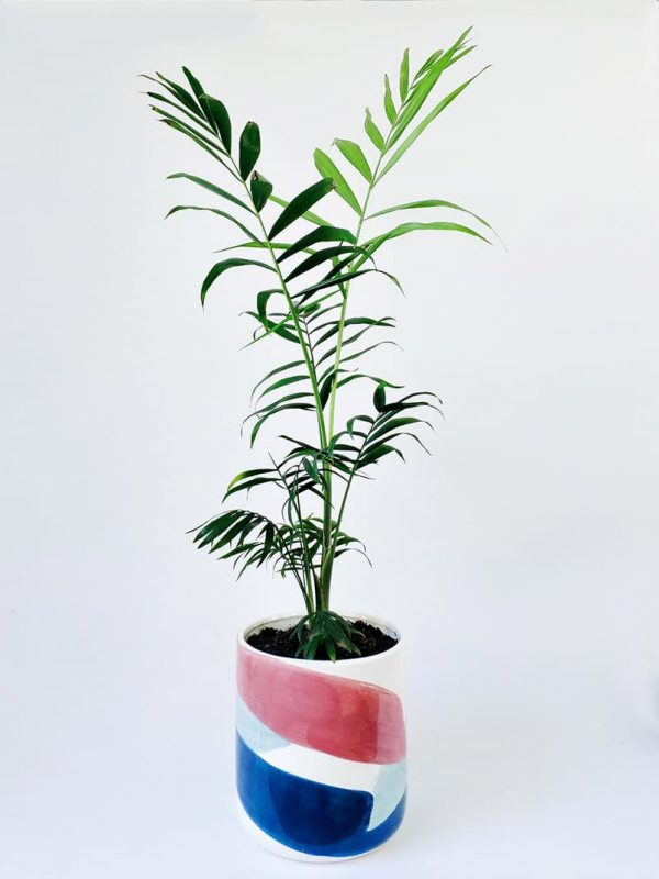 Parlour Palm in Brushstrokes Planter